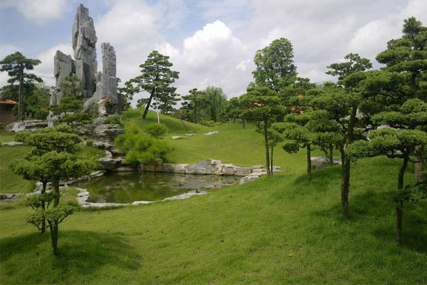 Đồi cỏ nhân tạo kết hợp với cây cảnh đồng quê và hồ nước