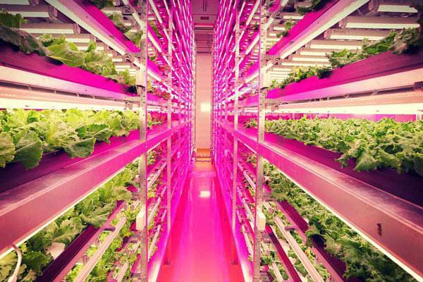 Đèn led ứng dụng trong nông nghiệp